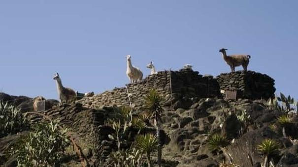 Biopark llama0803 1528095927