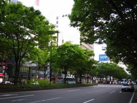 Aoba dori avenue 1528096253