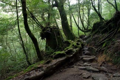 Shiratani unsui gorge 11 1528096386