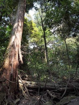 Kasugayama primeval forest 02 1528089206