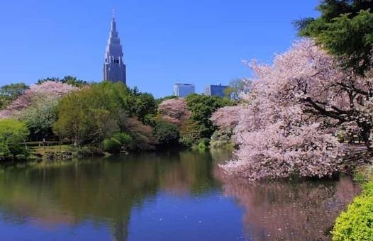 Shinjuku gyoen national garden   sakura 3 1528087978